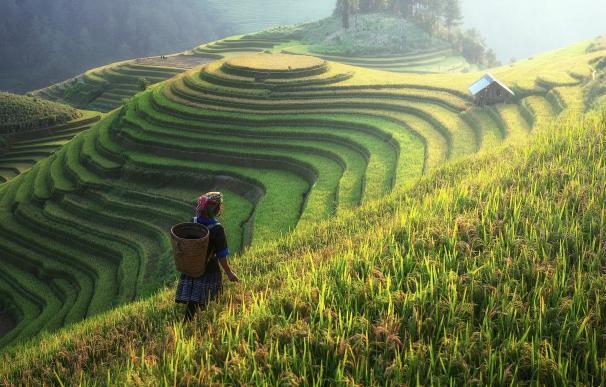 Campos cultivados en China