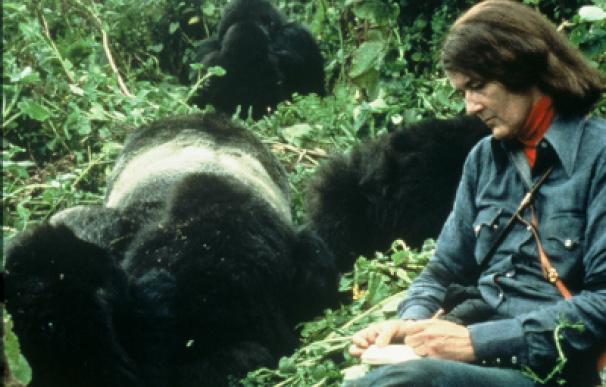 Dian Fossey con uno de sus gorilas. /The Dian Fossey Gorilla Fund