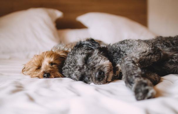 Los 'Airbnb' para perros: apps para que las mascotas disfruten de sus vacaciones