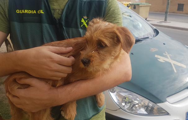 El pequeño cachorro fue rescatado y ha sido adoptado. /Guardia Civil