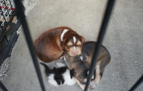 Fotografía de los cachorros que un hombre iba a tirar a las vías del tren en Getafe.