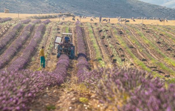 Cultivo, campo, agricultura.