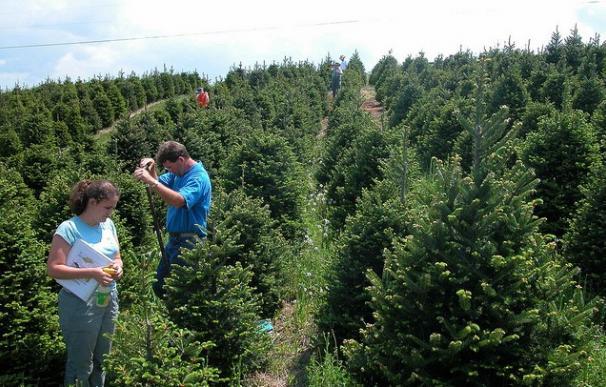 La plantación de árboles de Navidad es una importante industria en el noroeste estadounidense / Soil Science