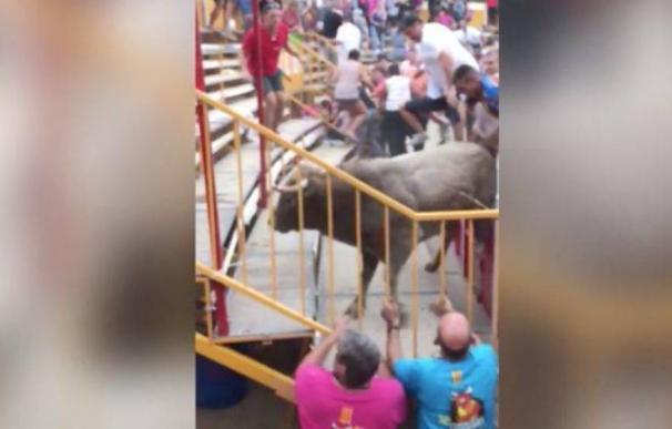 Toro escapado en el correbou de Gerona