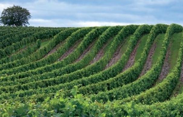 El empleo en la agricultura española se sitúa por debajo de la media europea con un 4,4% en 2012