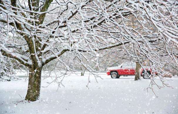Nieve, frío, árbol