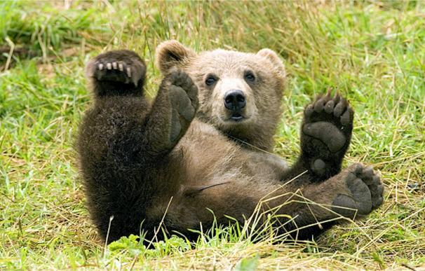 Fotografía de una cría de oso en el bosque.