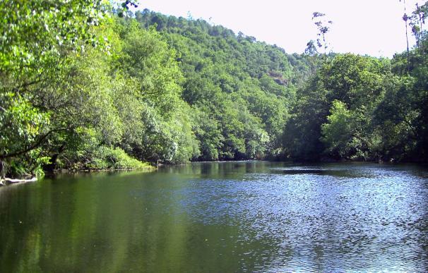 Río Ulla, Padrón