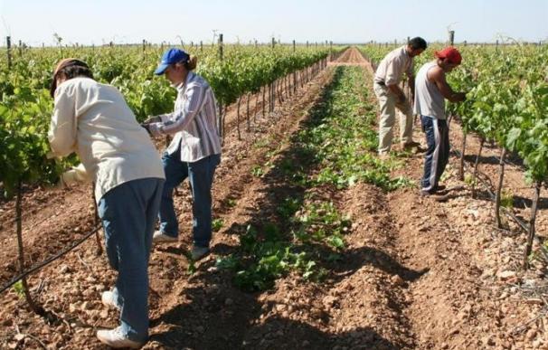 Junta destina al Programa de Empleo Agrario un total de 44,3 millones, igual cantidad que el pasado año