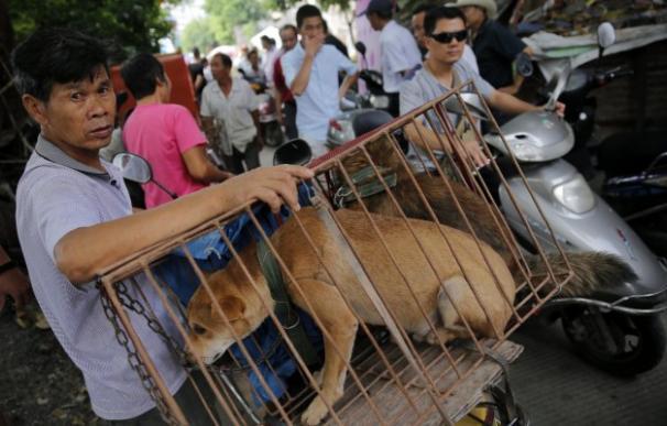 Festival de la carne de perro de Yulin