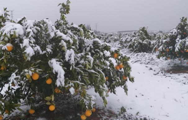 cítricos borrasca Gloria nieve