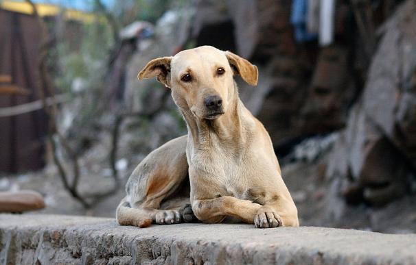 Fotorgafía de un perro abandonado en la calle.