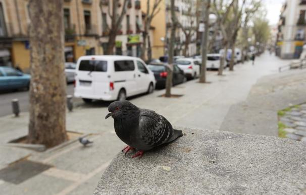 Una paloma en la madrileña calle Ribera de Curtidores