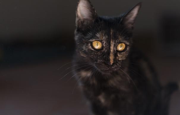 Fotografía de un gato.