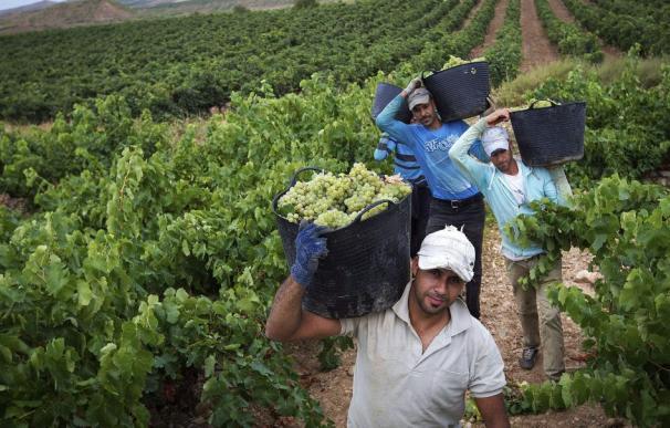 Inmigrantes trabajan de temporeros en España. / EFE