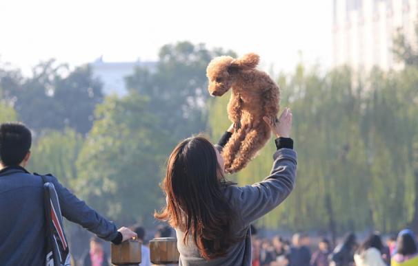 China prohibirá comer perros
