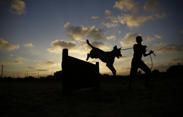 Los perros callejeros de Franja de Gaza ya tienen un refugio