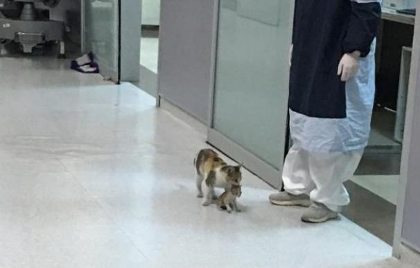 gatita gata con su cría en urgencias hospital