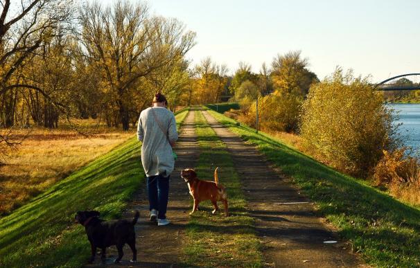 Fotografía de una persona paseando dos perros. En Londres se pueden cobrar 61.000 euros por cuidar una casa y pasear a dos perros.