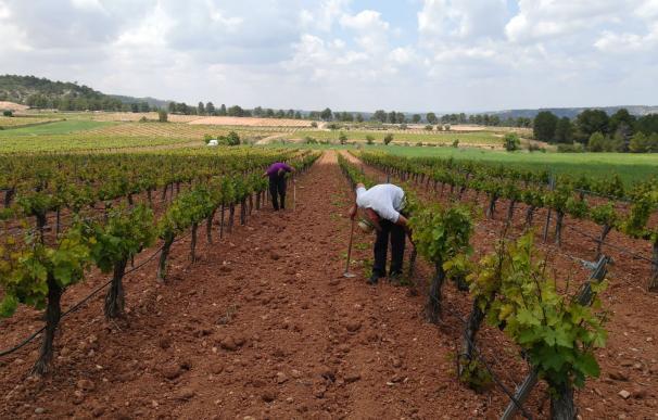 Los agricultores valencianos denuncian los bajos precios en la crisis. /La Unió