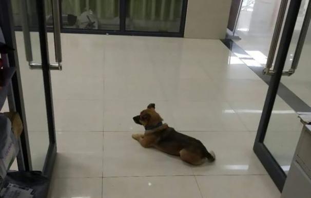 Perro espera en un hospital de Wuhan