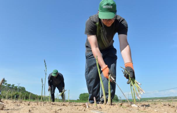 Trabajadores en el campo