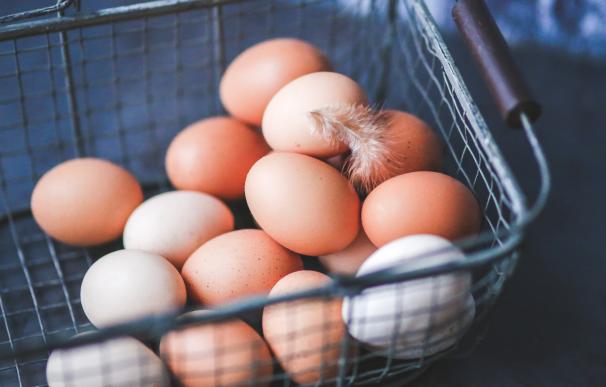 Como saber si un huevo está malo