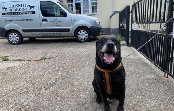 el perro labrador negro abandonado por su perro tras 10 años.