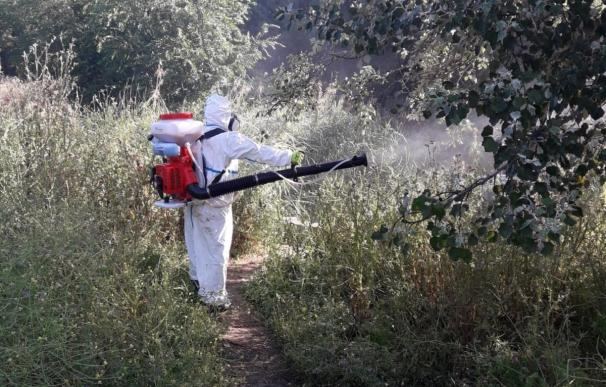 El Ayuntamiento de San Fernando de Henares, a través del área de Sanidad que dirige Rubén Fernández, continúa con la intensa campaña para la eliminación de larvas (Foto de ARCHIVO) 14/7/2019