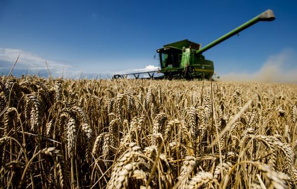 Los precios bajos y el hachazo de la PAC ahogan la mejor cosecha en tres décadas