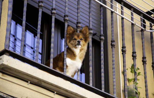 Puede haber conflicto con la comunidad de vecinos por tener un perro.
