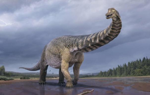 Un nuevo saurópodo descubierto en Australia es uno de los mayores dinosaurios conocidos