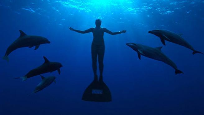 Los delfines salvan a los humanos que se ahogan porque entienden que se están ahogando