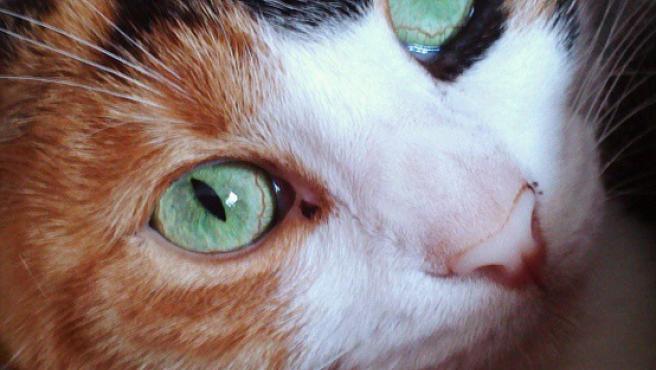 Cuánto Vive Un Gato Por Qué Ronronea 40 Respuestas A Preguntas Sobre Gatos